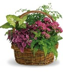 plant basket of green plants